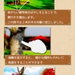 ミニチュア写真3