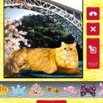 猫カメラ3