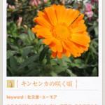 フェリシモ My500色カメラ4