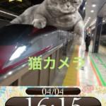 猫カメラ5