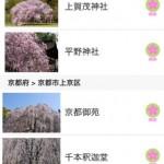 京都の桜名所2