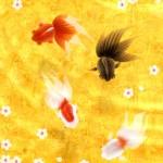 Wa Kingyo - 和金魚 -1