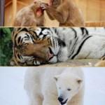 動物だより1